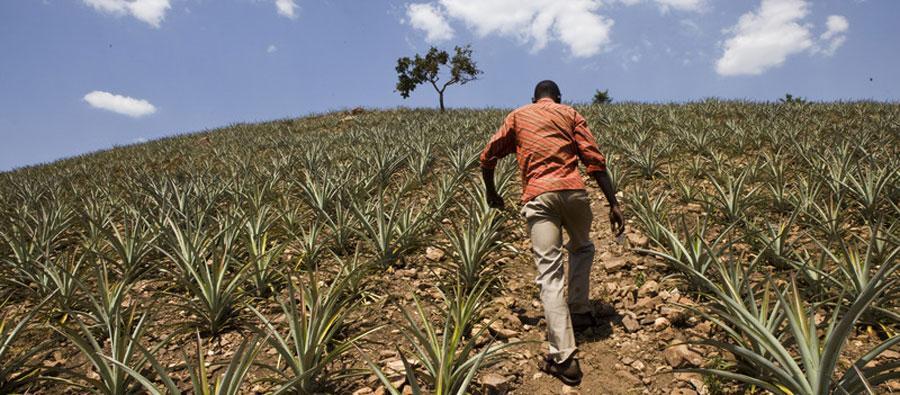 Le manque de financements adéquats empêche les petits exploitants agricoles africains d'améliorer la production