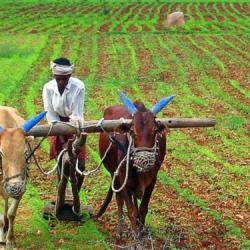 Burkina Faso : lancement d'un projet de création de 2.000 écovillages