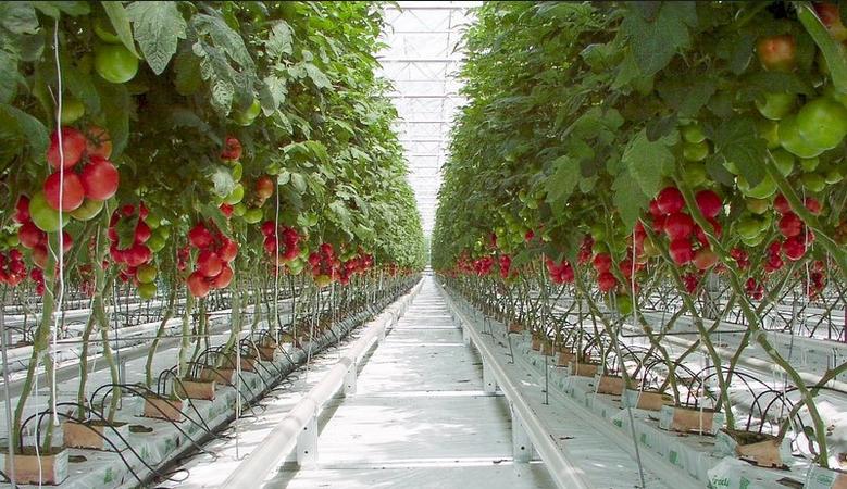 Agriculture cap vert
