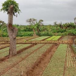 Le Mozambique bénéficiera d'un projet d'appui pour la résilience agricole