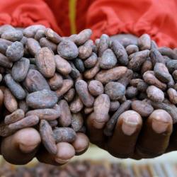 Côte d'Ivoire : hausse du prix d'achat du cacao aux producteurs