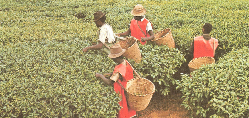 Cafe ouganda