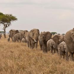 Le Kenya fera pression sur les pays africains en vue d'une meilleure protection des éléphants