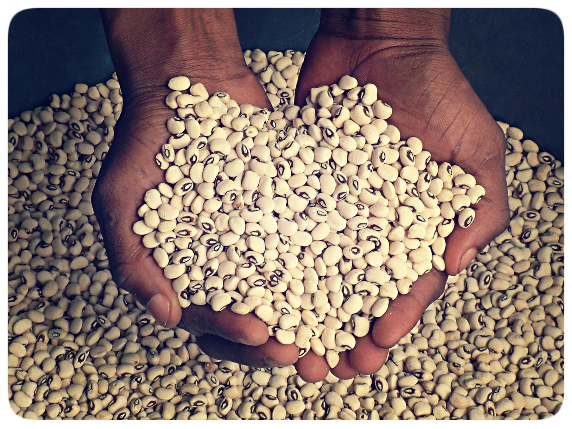 Le Kenya va accueillir le congrès panafricain des semences
