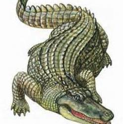 Conte : Larmes de crocodile