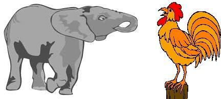 Elephant et coq