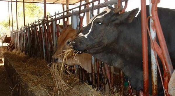 Burkina Faso : le secteur de l'élevage occupe plus de 80% des ménages des milieux ruraux