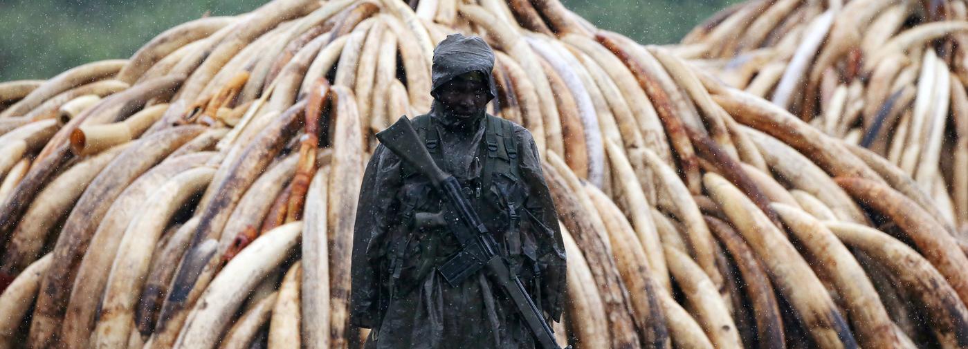 Des gardes forestiers du Botswana formés à l'utilisation des chiens renifleurs pour détecter l'ivoire