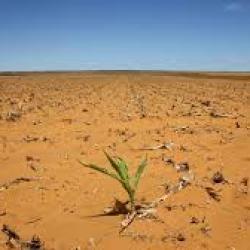 Kenya : la sécheresse pourrait affecter les exportations de légumes, selon l'industrie