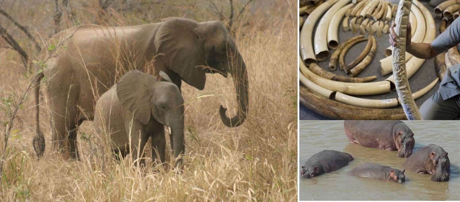 Le Togo veut se conformer à la CITES pour protéger les espèces sauvages menacées d'extinction