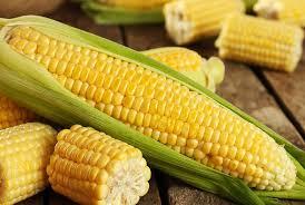 Le gouvernement béninois facilite l'exportation du maïs dans les pays du continent africain