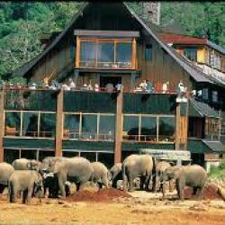 Les hôtels kenyans enregistrent des réservations record pour les vacances de Pâques