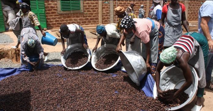 Le Bénin appuie le développement de la filière karité au profit des femmes