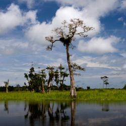Marécages de Loango