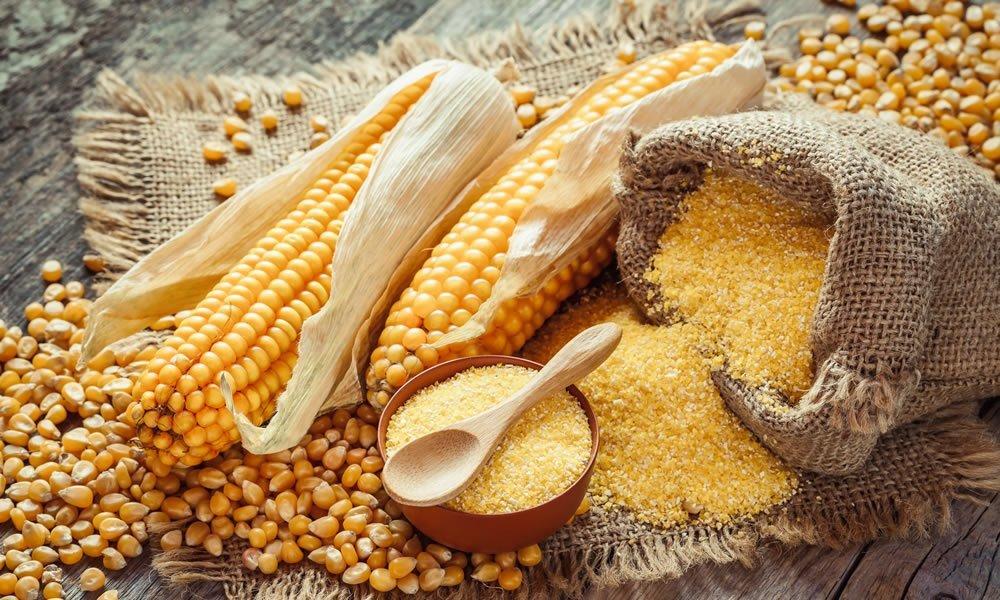 Le Mali va booster sa production de maïs pour une sécurité alimentaire durable