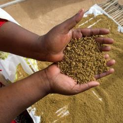 Burkina Faso : croisade contre l'insécurité alimentaire