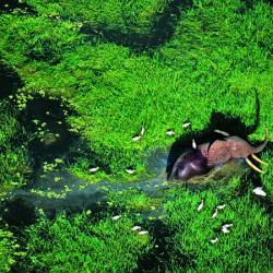 Parc national de Loango(Gabon)