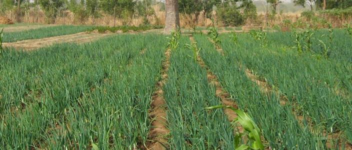 Burkina Faso : le secteur agro-sylvo-pastoral occupe près de 80% de la population active pour seulement un tiers du PIB