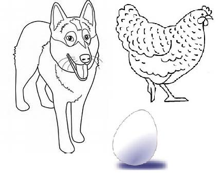 Conte camerounais : La poule, l'oeuf et le chien