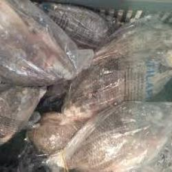 RDC : le gouvernement interdit l'importation et la commercialisation des poissons Tilapia