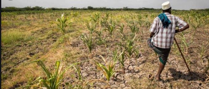 Cap-Vert : la sécheresse affecte 37% de la population