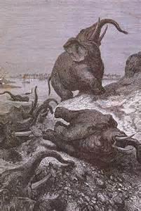 Conte : Le cimetière des éléphants