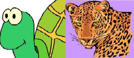 Tortue et leopard