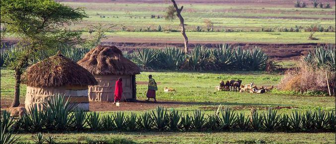 Le gouvernement tanzanien annule 12 zones protégées et 7 réserves en faveur de 920 villages