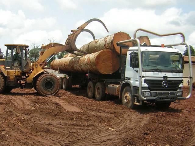 Congo : un manque à gagner de plus de 12 milliards de francs CFA dans la filière bois